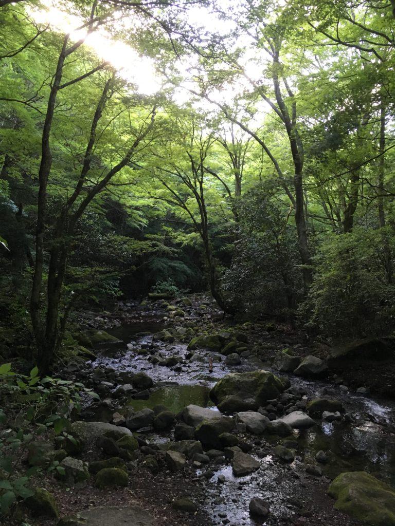 ちすじの滝近くに流れる川